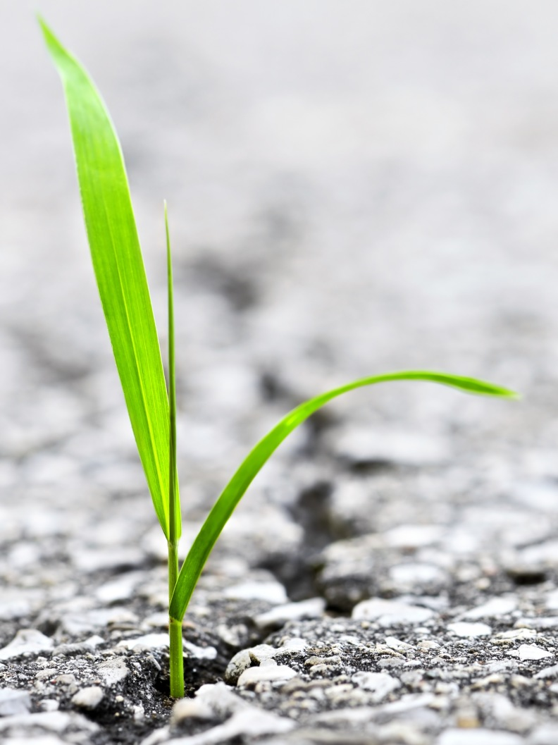 Grass grows through asphalt - overcome rigidity with body-oriented trauma therapy in Bonn