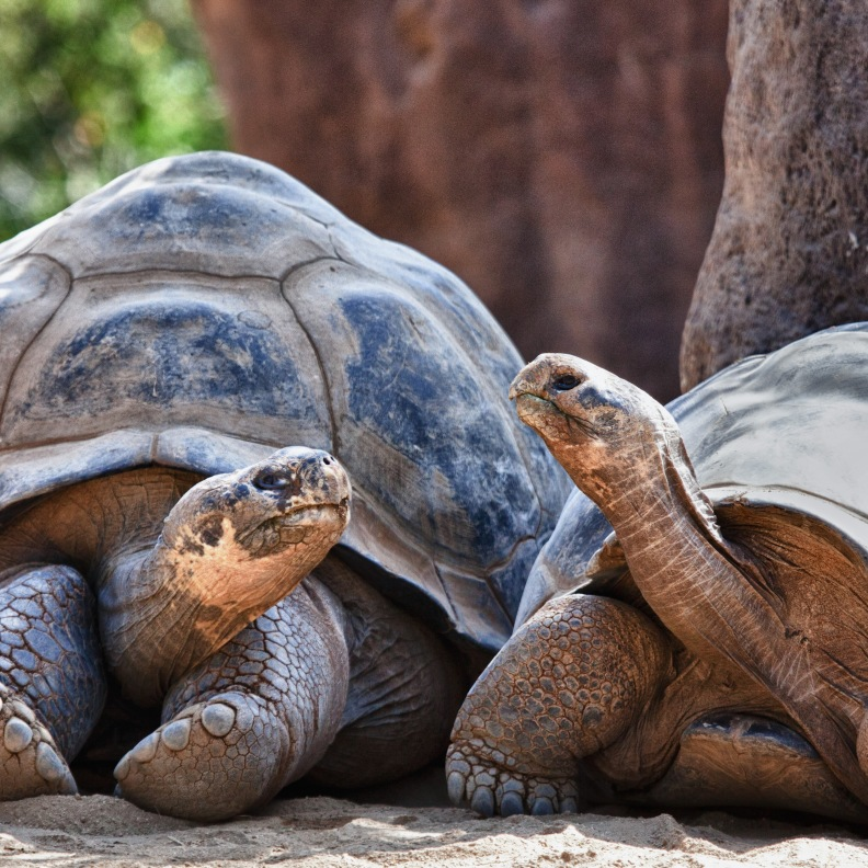 Tortoises - contact to life after isolation through trauma