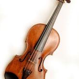 Violine (Geige)